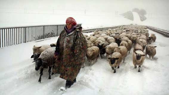 Film Winter Nomads